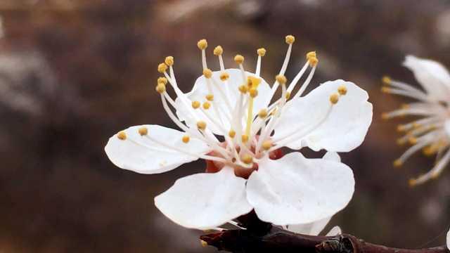 又是一年赏花季,汝州花海免费看!
