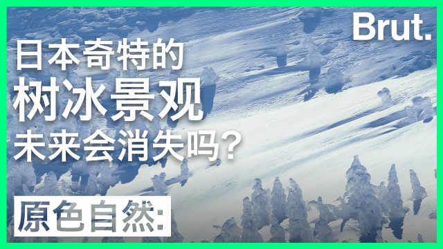 日本的树冰景观,未来会消失吗?