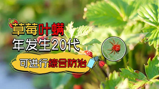 草莓叶螨综合防治方法解析