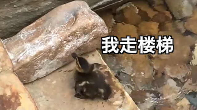 """小鸭子遇到""""瀑布""""阻拦,怎么办?"""