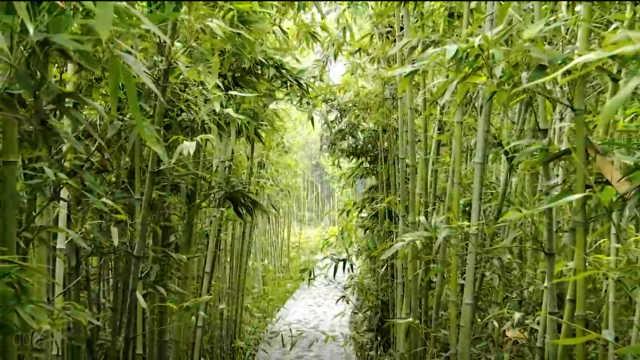 这个五一,来韩城竹园景区走一走