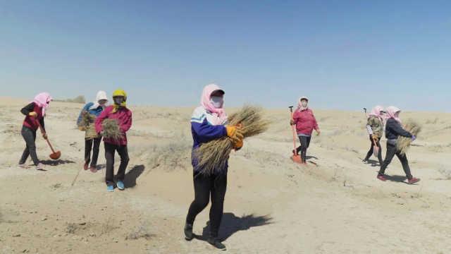 留守妇女在沙漠种树,组大妈治沙队