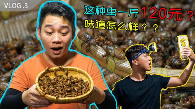 这种虫子120元一斤,味道怎么样?