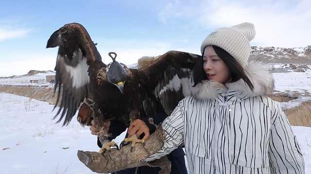 亲历新疆昭苏哈萨克族猎鹰传统风俗