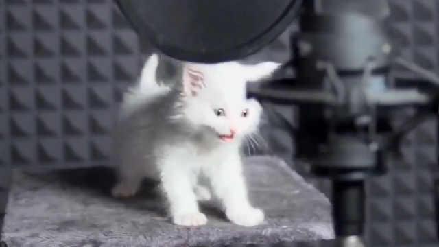 小奶猫乐队现场演唱,萌吐奶