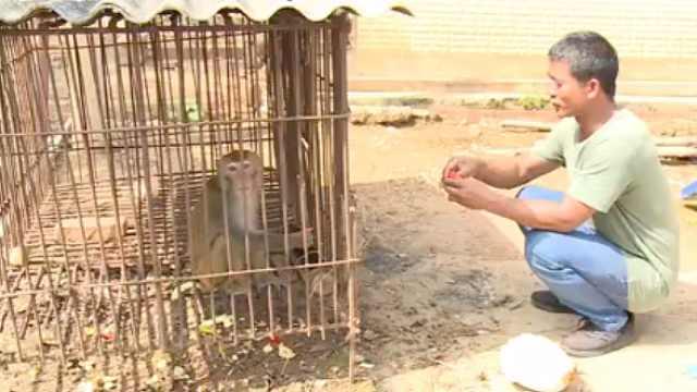 他把猴当娃养4年,得知违法含泪上交