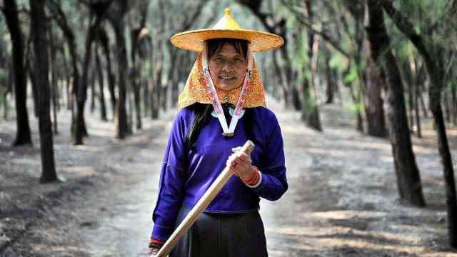 这个女人守护了这片林场整整26年