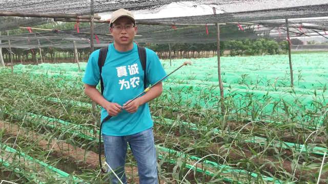 果蔬种植如何做到不烧根、伤根?
