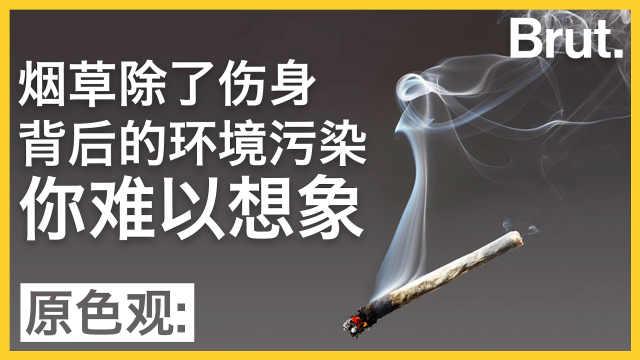 吸烟除了伤身,带来的污染更可怕