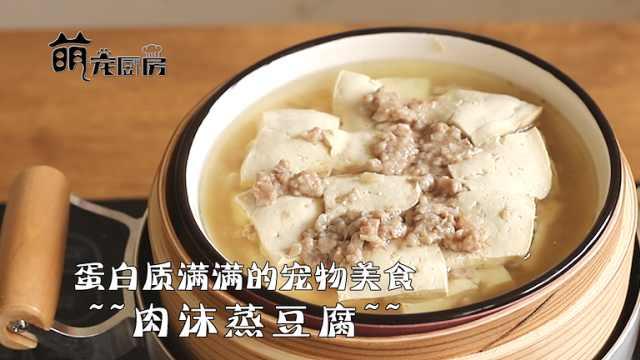 【萌宠厨房】补充蛋白质的宠物饭食