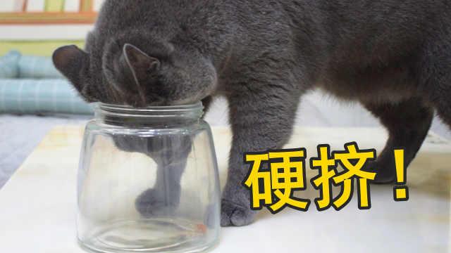 在玻璃瓶放猫粮,能测试出猫智商?