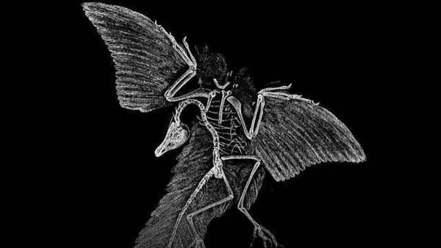 始祖鸟化石如何揭开进化论秘密
