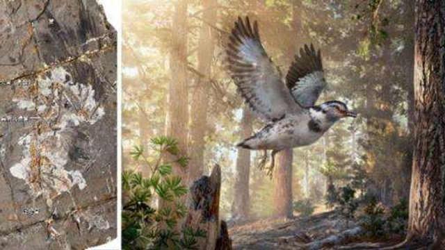 过渡性化石决定什么才是鸟类的祖先