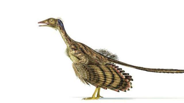 长满羽毛的恐龙在中国被发现
