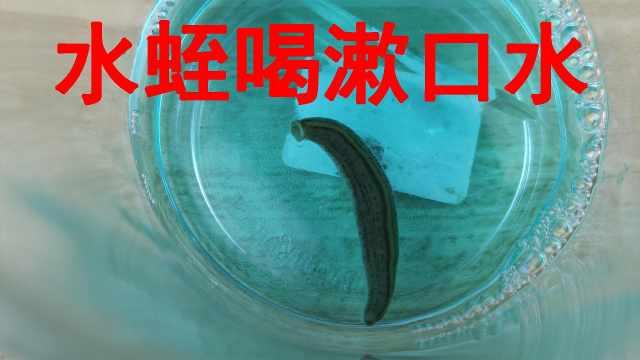 """给""""水蛭""""喝点""""漱口水""""会怎么样"""